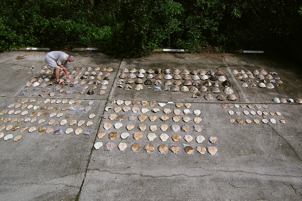 The remains of 164 Suwannee cooters from a rural dump site near Cedar Key, Florida.