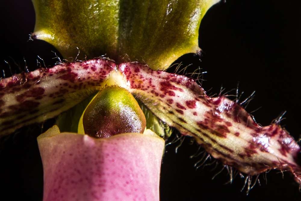 botanic-3.jpg