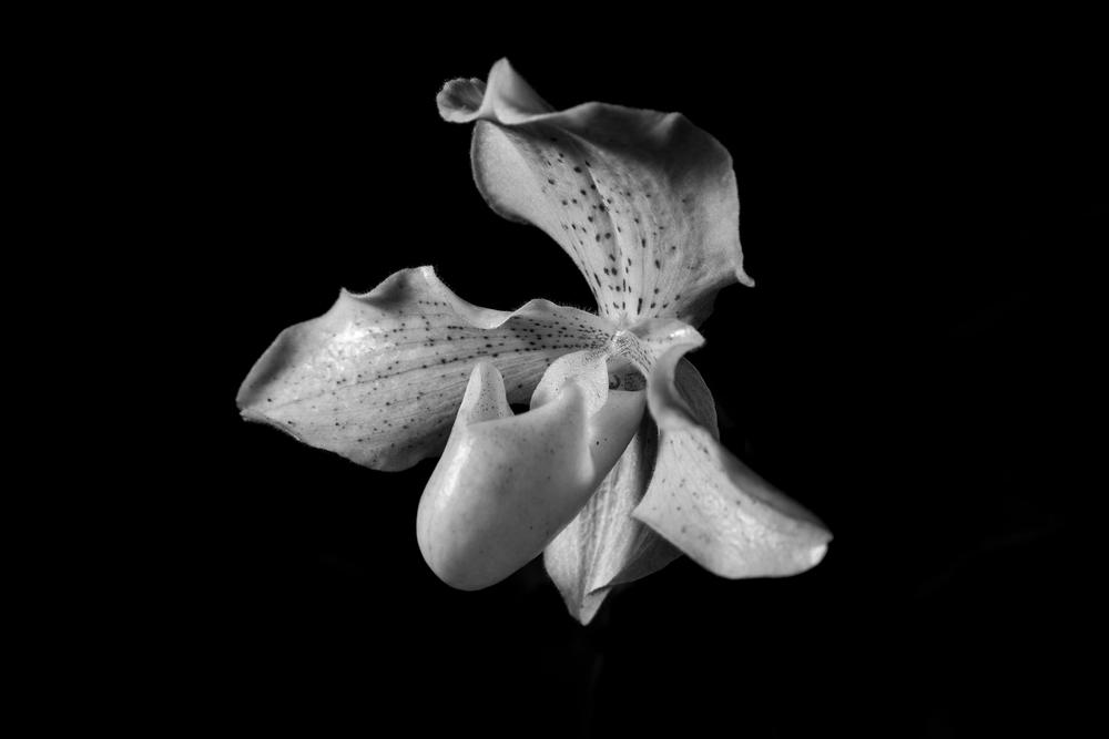 botanic-7.jpg