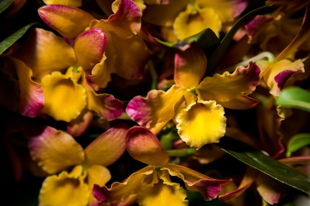 botanic-8.jpg