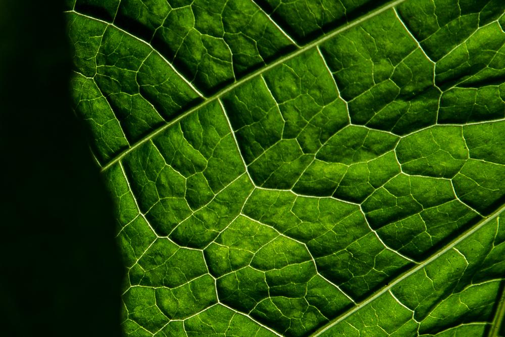 botanic-11.jpg