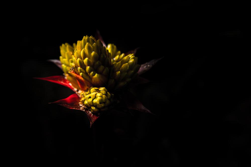 botanic-13.jpg