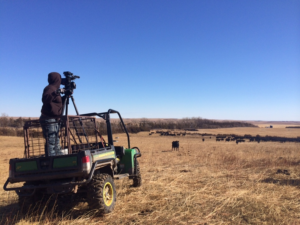 <strong>Shooting a cattle stampeded in Nebraska</strong>