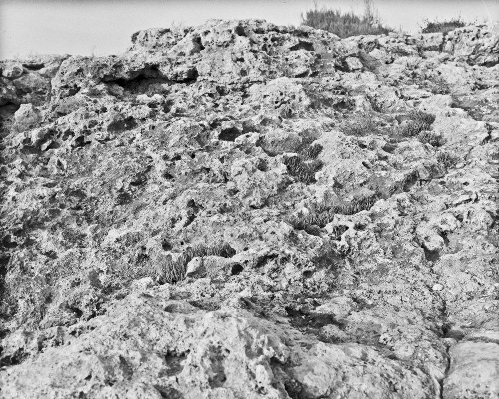 lydiasee-colpodarialydiasee_090914-beachrocks-2014-4x5_summer032.JPG