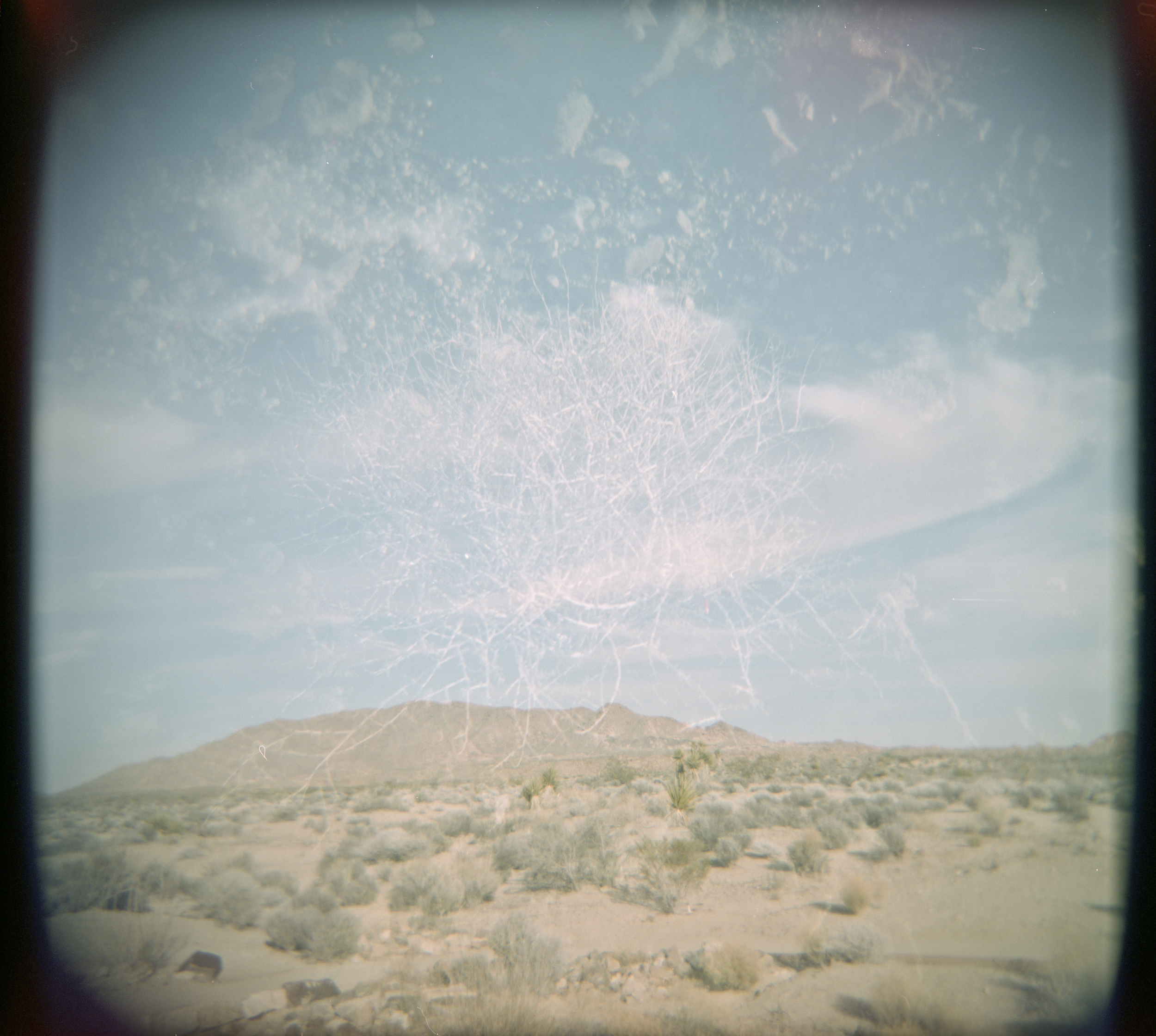 double exposure - holga - joshua tree - 2013
