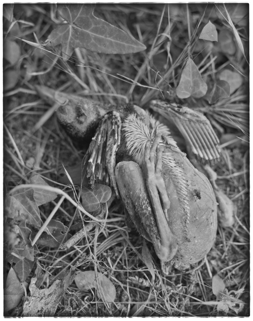 lydiasee_090814-deadbird1-2014-4x5_summer022