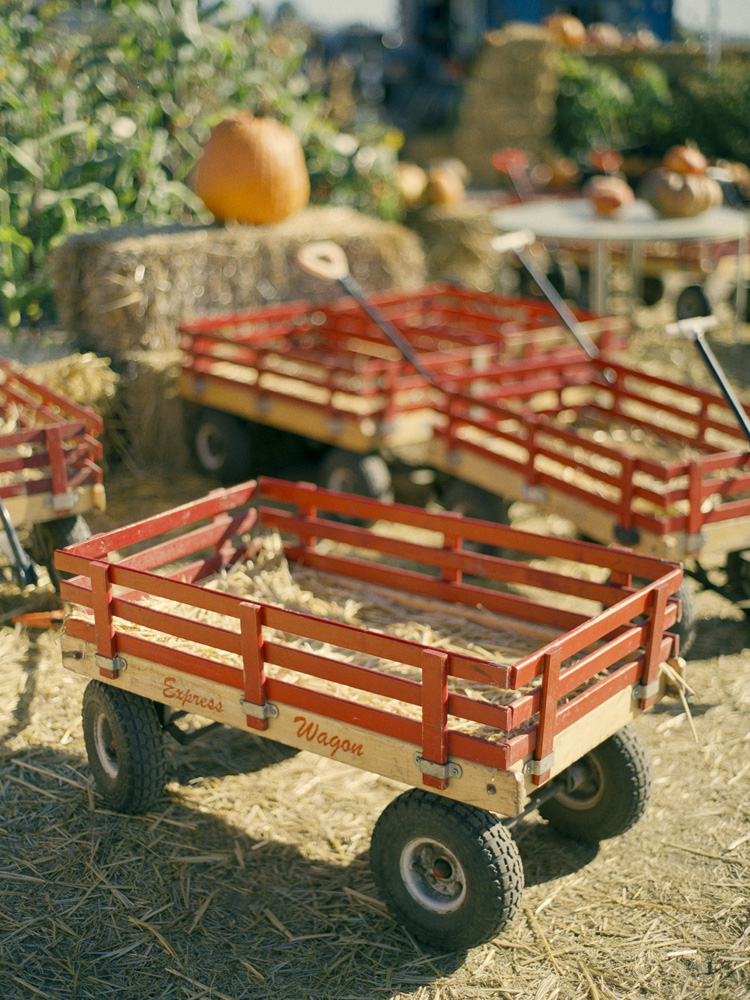 Wheelbarrows at Farmer John's Pumpkin Patch Half Moon Bay