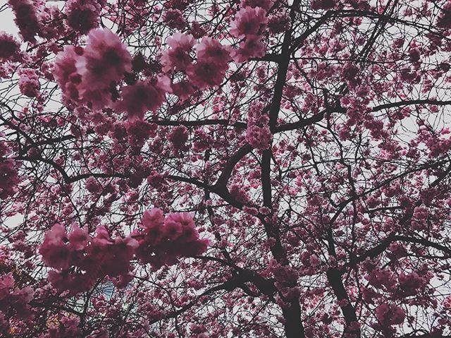 Pretty blossom 🌸