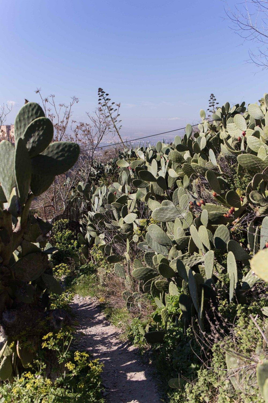 Granada - Cactus y Sacromonte
