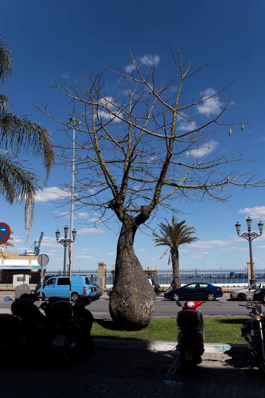 Cádiz - Botero