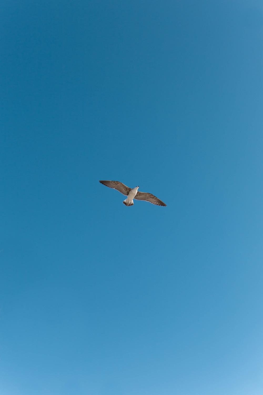 Cádiz - A volar