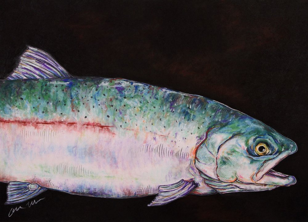 Steelhead#Pastel on charcoal on archival paper#22 x 30 inches#$900