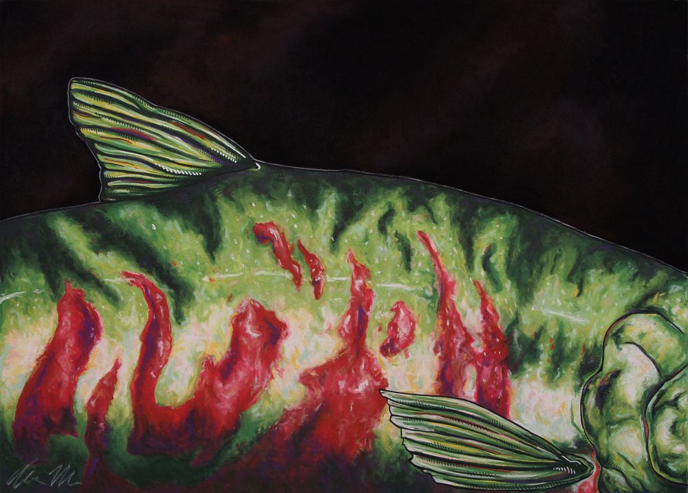 Chum Salmon#Pastel on charcoal on archival paper#22 x 30 inches#$900