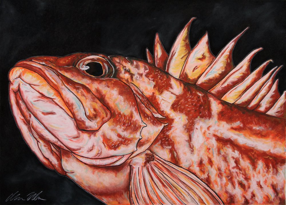 Copper Rockfish#Pastel on charcoal on archival paper#22 x 30 inches#$900