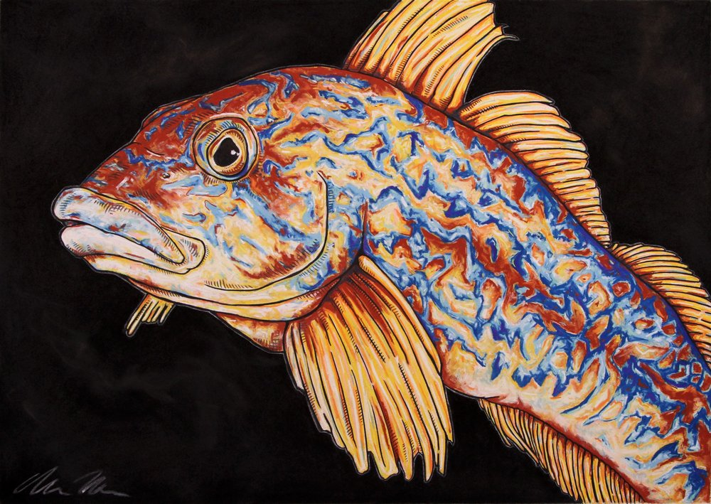 Kelp Greenling#Pastel on charcoal on archival paper#22 x 30 inches#$900