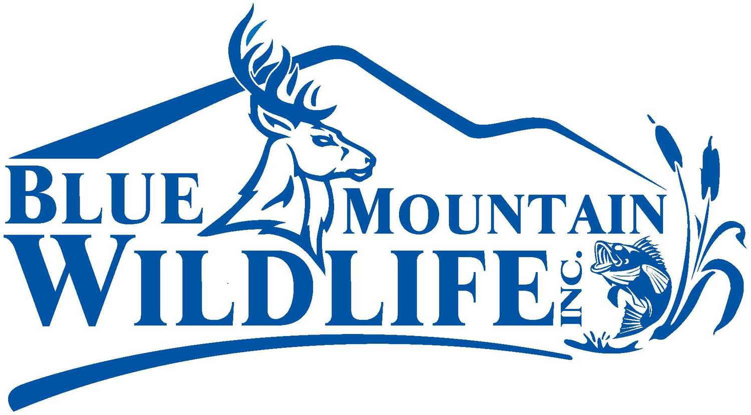 Blue Mountain Wildlife