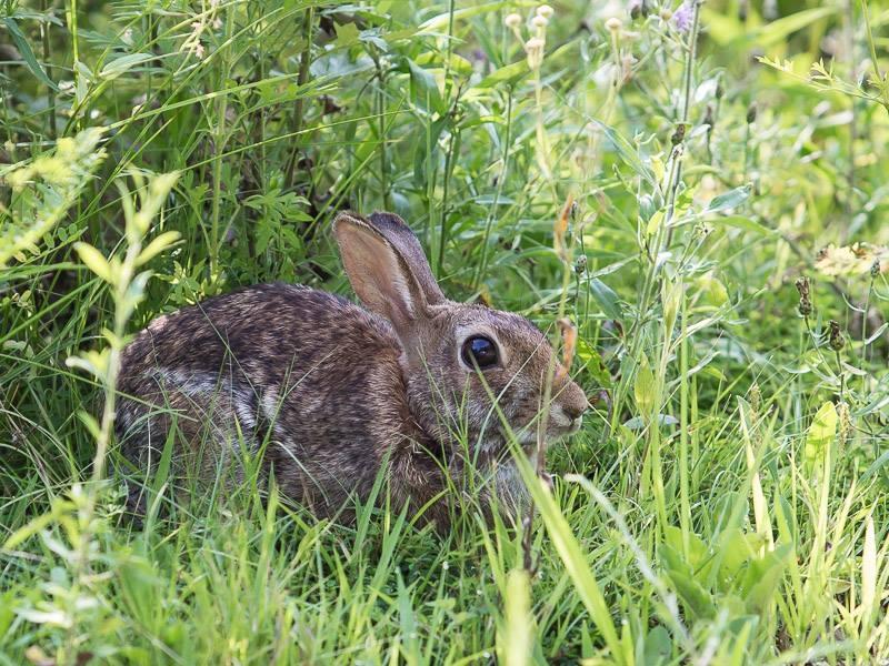 20150729 KG Kerny Wildlife 1.jpg