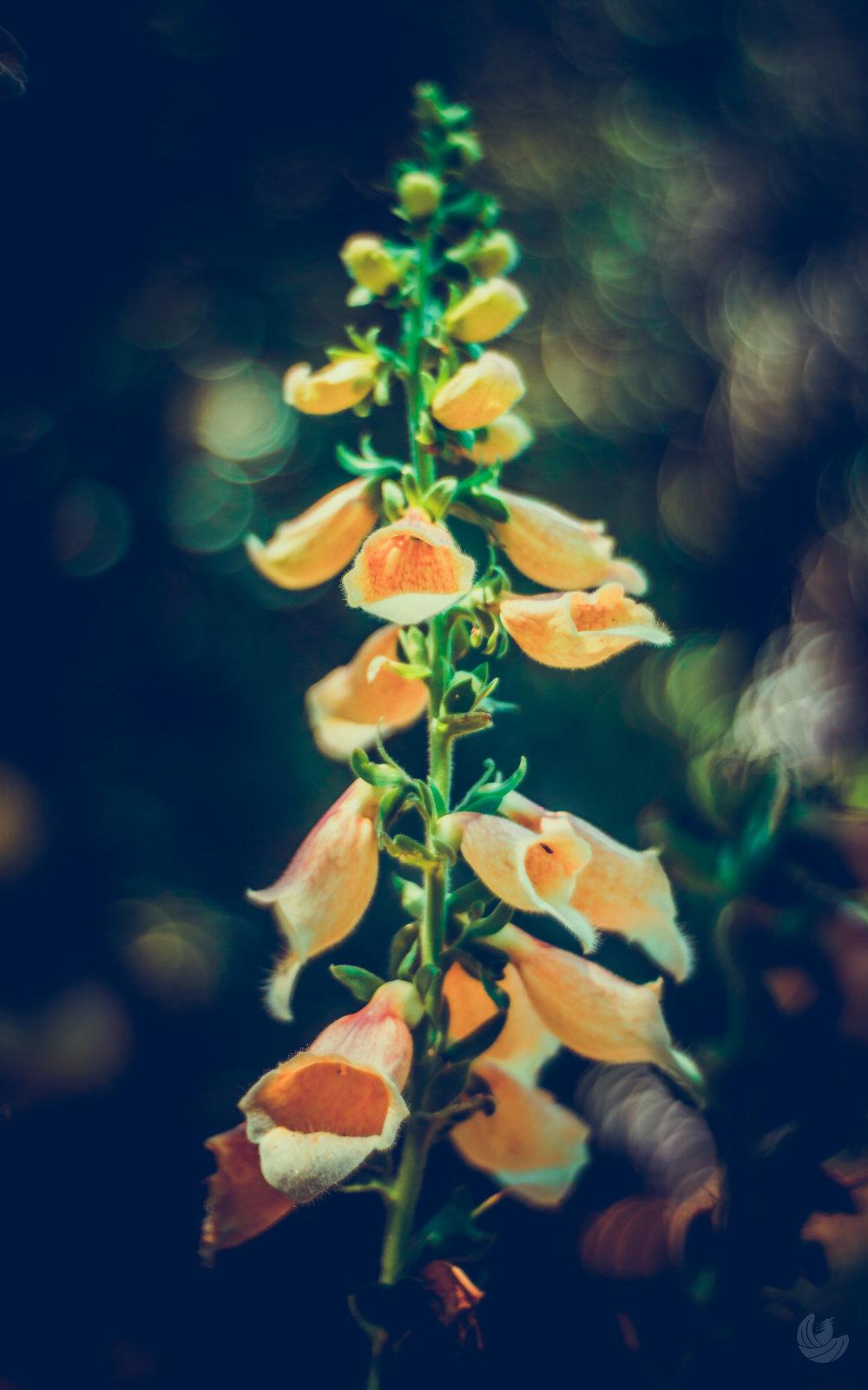 botanical-1-3.jpg