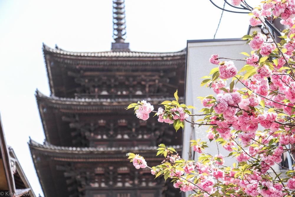 kimleow_cherryblossom_kyoto_travel-7.jpg