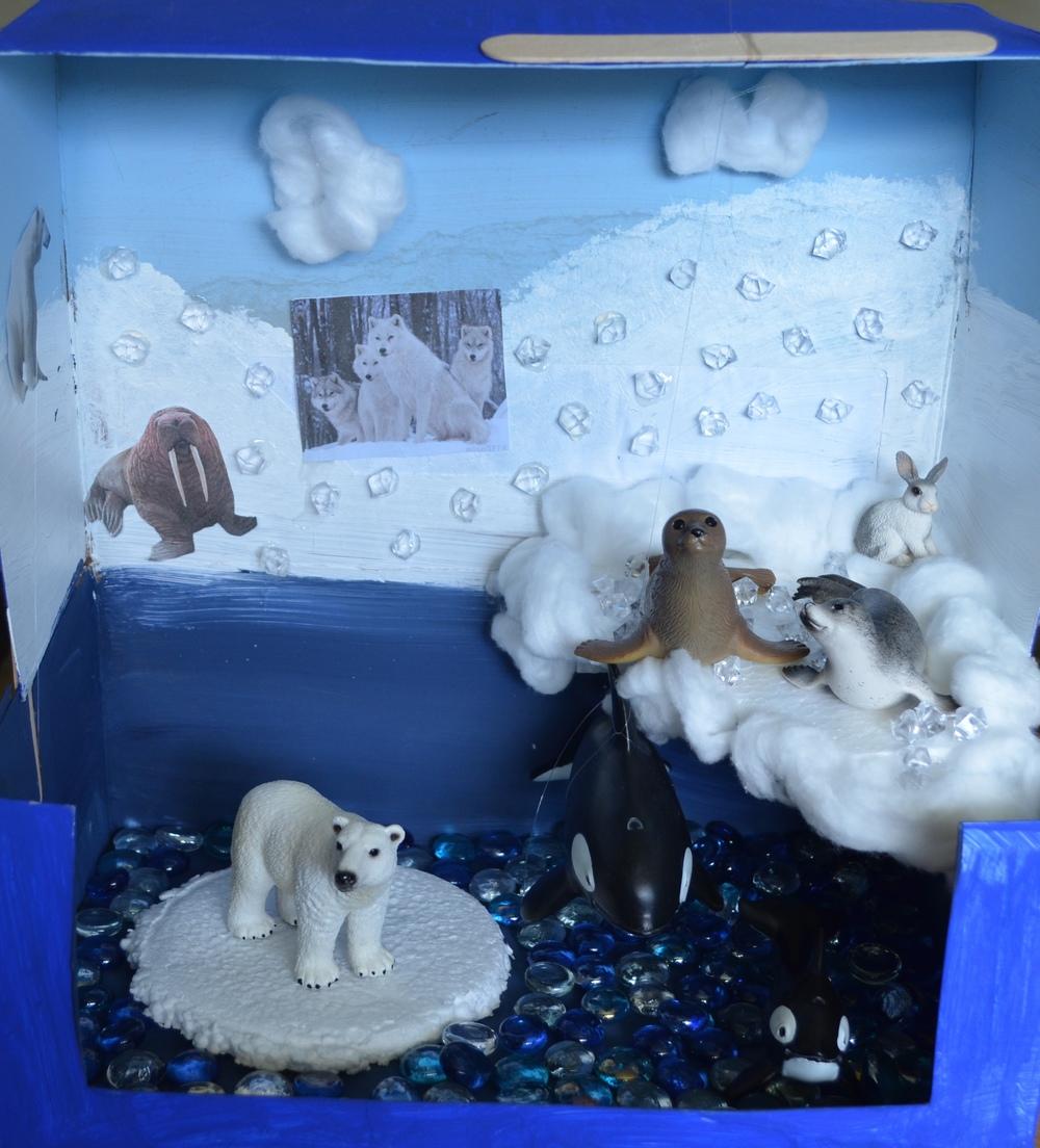 Image result for arctic habitat diorama
