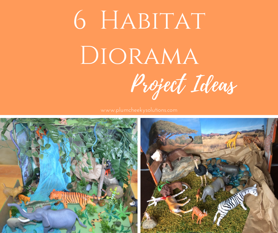 Habitat Dioramas — Plum Cheeky Solutions-Lovin' This Mom Life
