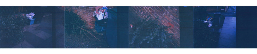 Photographic studies of discarded Christmas trees in Britain