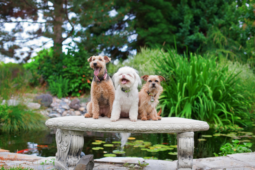This particular shot took quite a few tries, but it was absolutely worth it! If I hadn't insisted on placing the dogs on this bench repeatedly, the owner wouldn't have this special group shot of all of her fur babies!