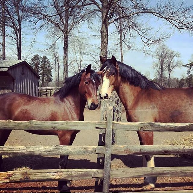 Gabe has settled in at RTF and is making new friends with his neighbor, Denali! Welcome to Red Tail, Gabe and Jessica! #repost #welshcob
