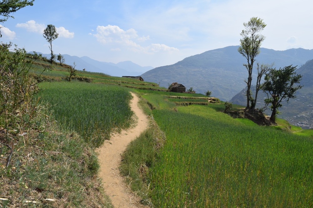A portion of the path to Kheen.