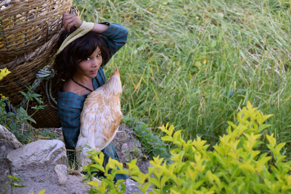 "1:30-3:30 PM  No tuition classes, but there is always work to be done. Before coming to afternoon tuition classes, students are in the village doing chores, housework, and taking care of their siblings. Here Sapona, an 8 year-old ""Rainbow"" class student, carries a basket of grass and one of her family's chickens down to another house."