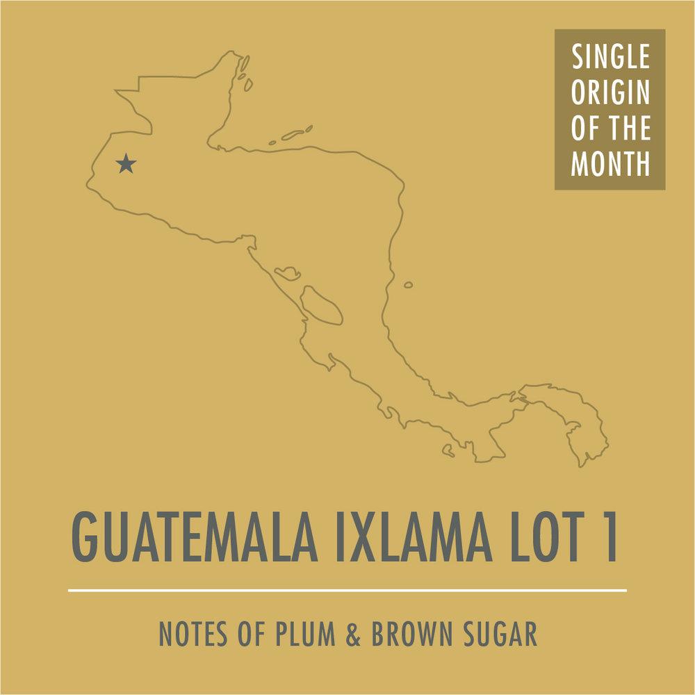 web_guatemala_ixlama_lot_1_SOM.jpg