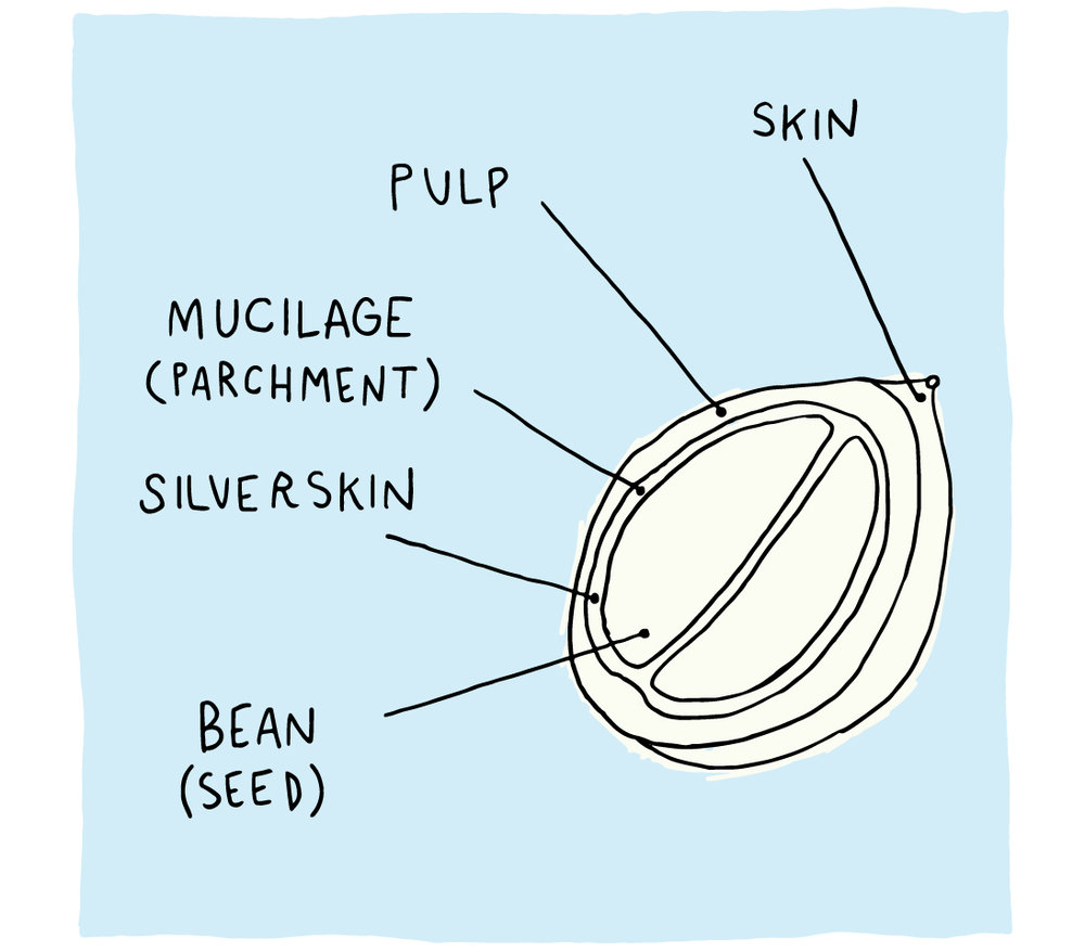 learn_page_images_3_bean.jpg