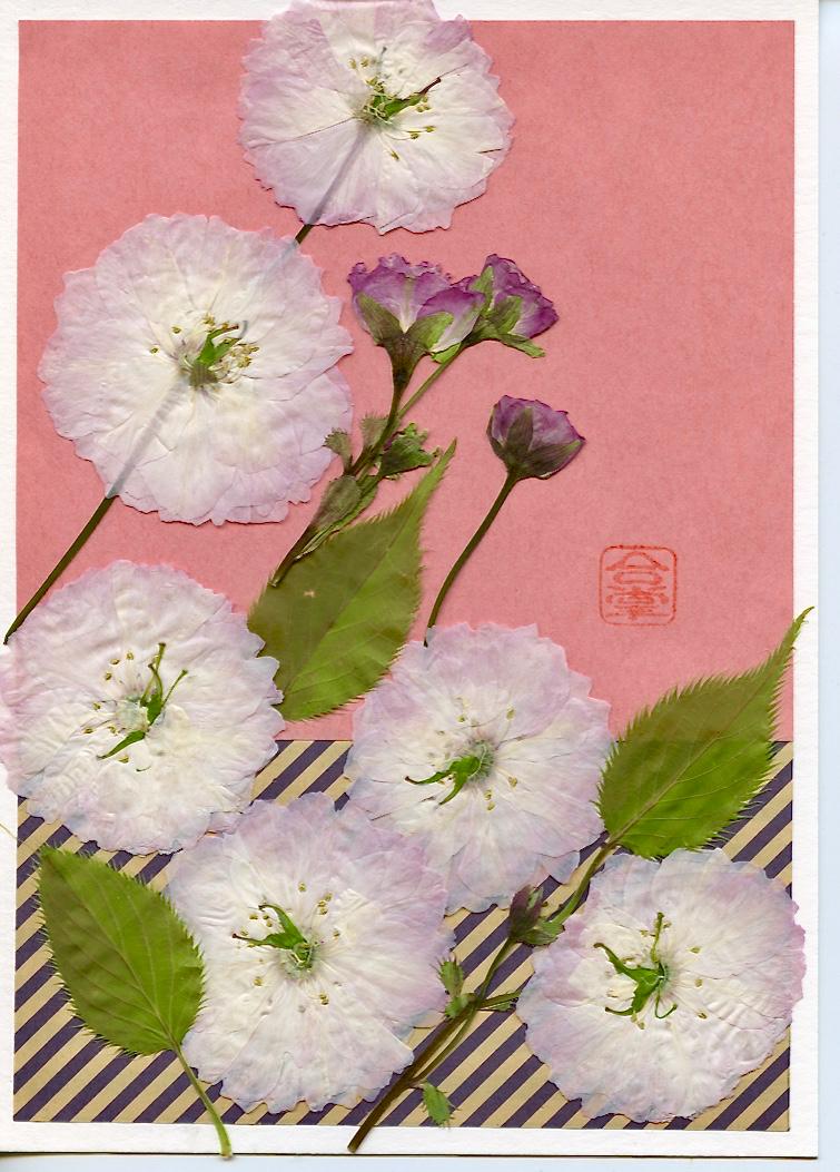 pink sakura with pink washi bg.jpg