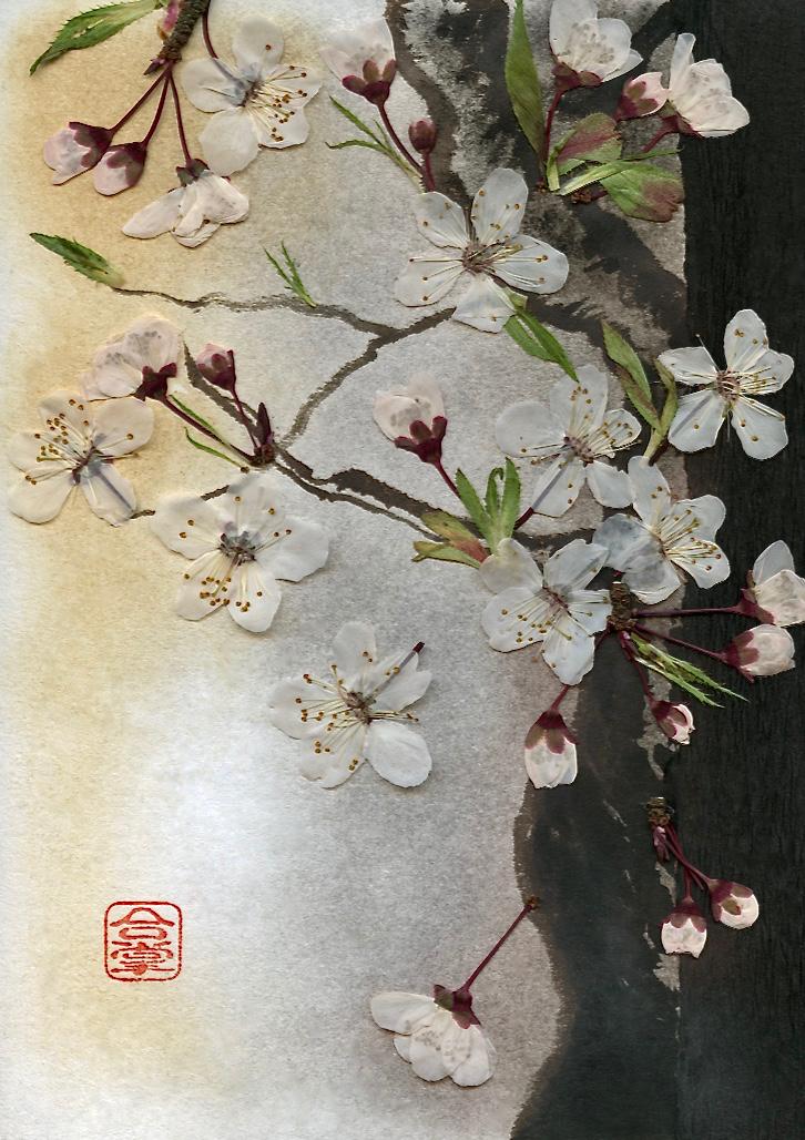 white sakura with a black tree.jpg