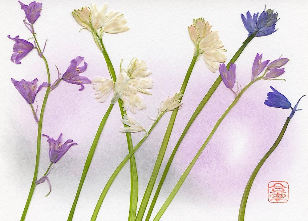 blu and white stems with pink bg.jpg