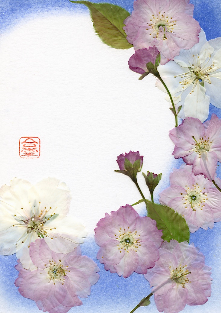 pink and white sakura with blue bg.jpg