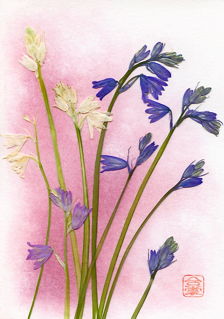 blu and white stems with red bg.jpg