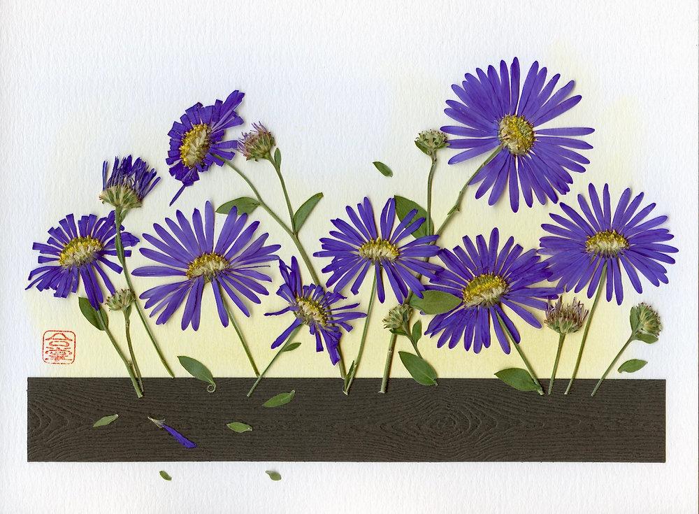 purple flowers 2017 (1).jpg