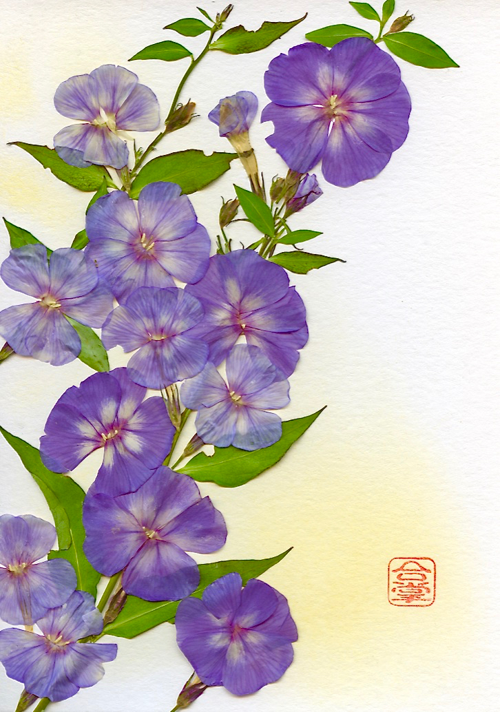 purple flowers with yellow bgd.jpg