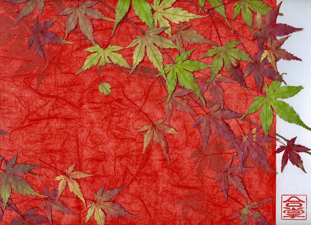 japanese maple with red bkgd.jpg
