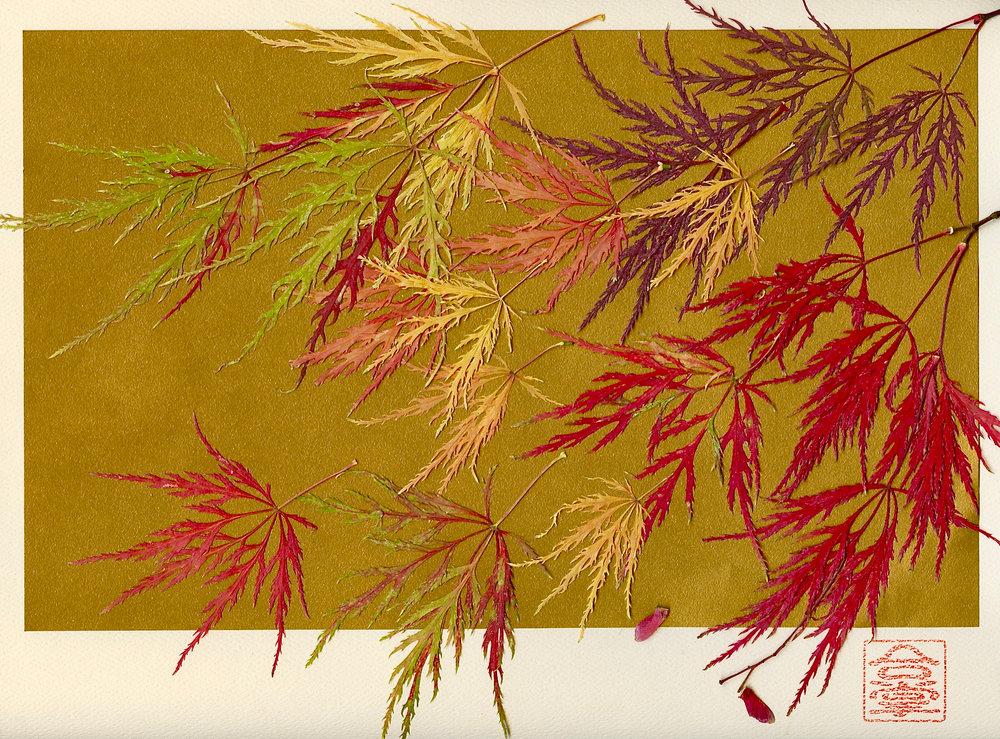 japanese maples.jpg