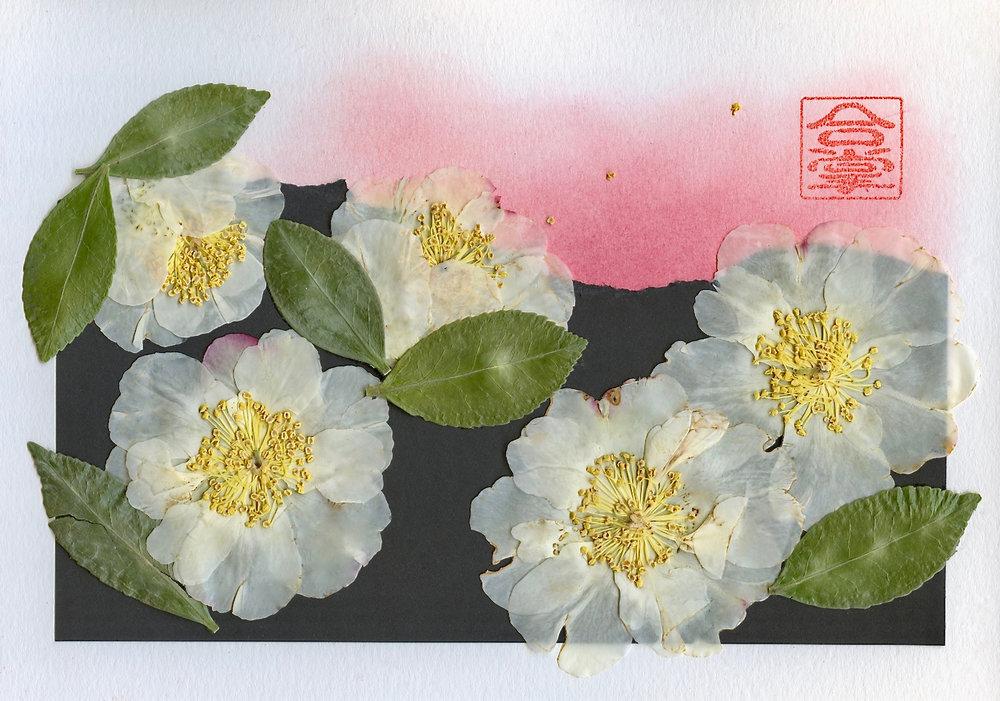 white camellia 2017.jpg