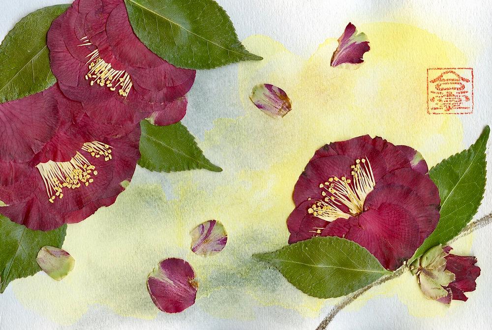 camellia watercolor bgd 2018.jpg