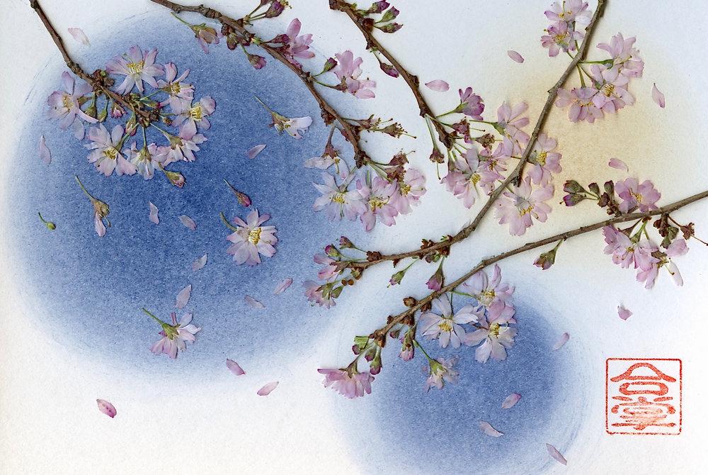 sakura small with blue bgd 2018.jpg