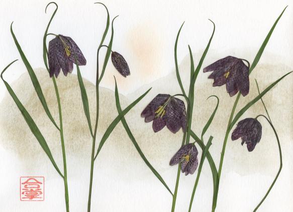 chocolate  lilies 2018.jpg