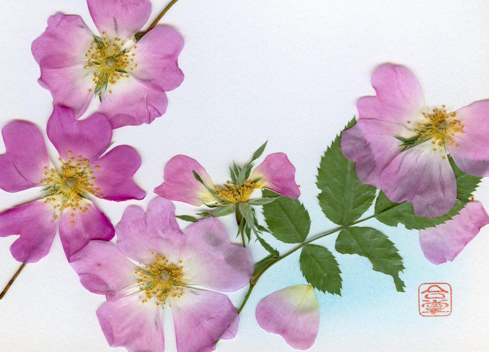 pink summer flowers 2018.jpg