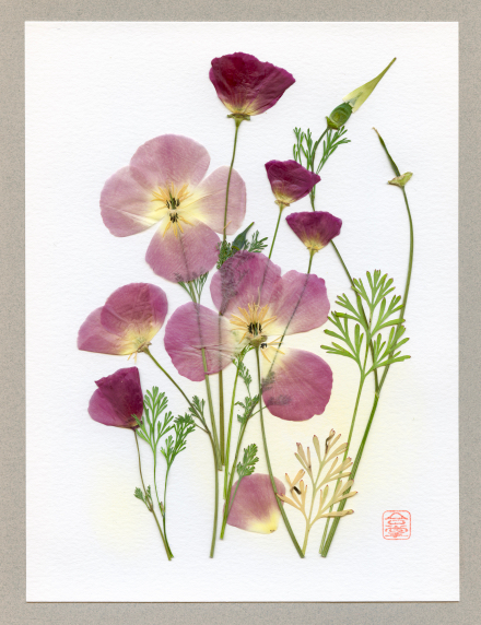 rosy pink poppies 2018.jpg