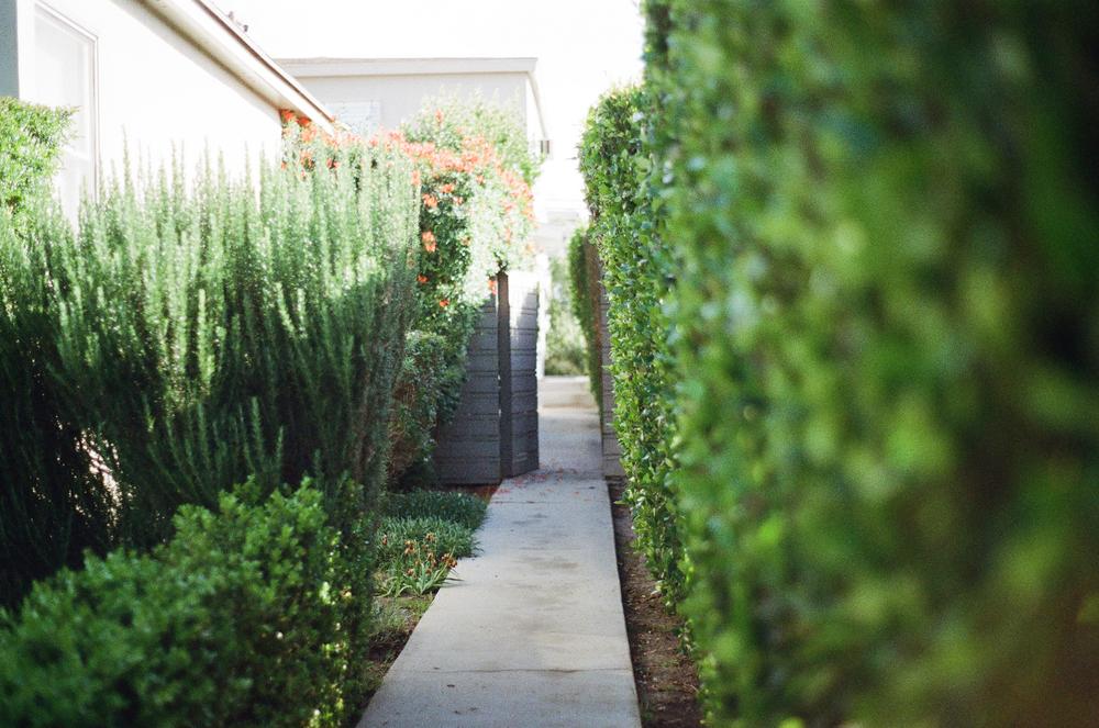 garden design-6.jpg