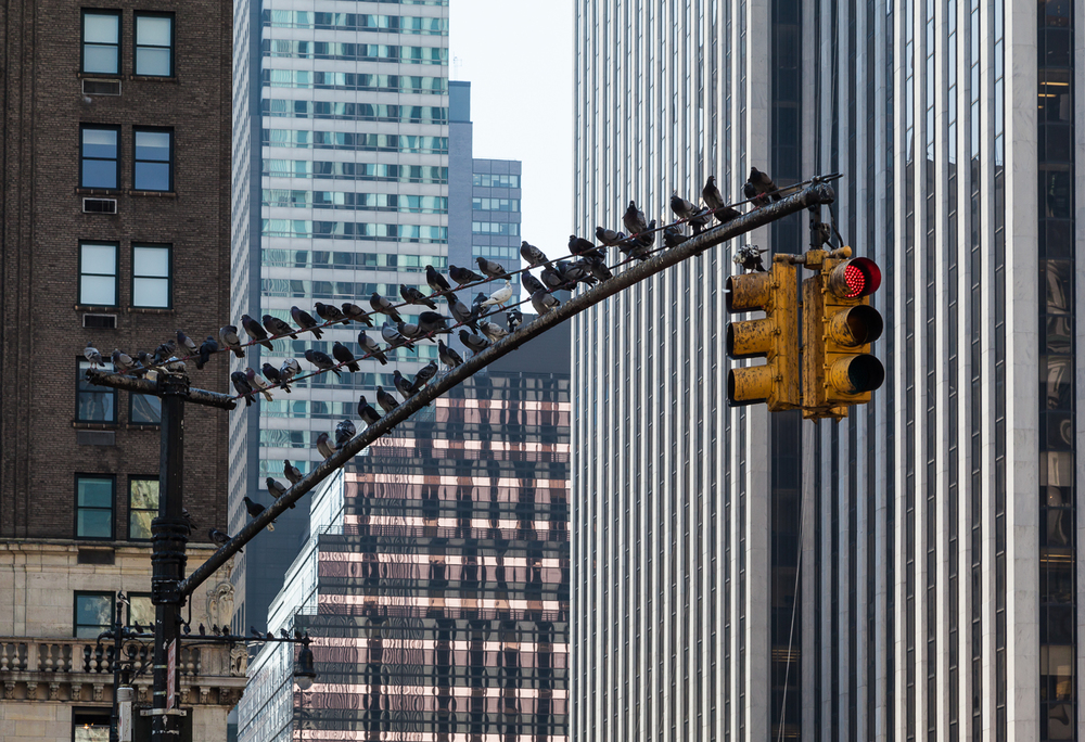 All Lined Up, New York