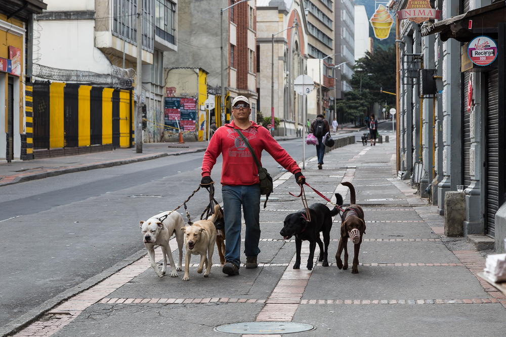 Dog Walker in Bogota